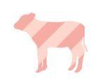 BIO_HANSL – Biofleisch vom Jungrind